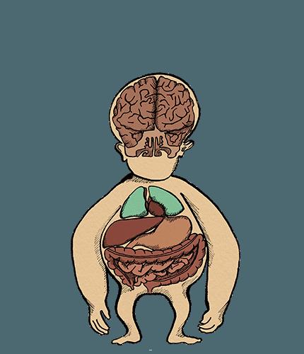 Rest & Digest Internal Body